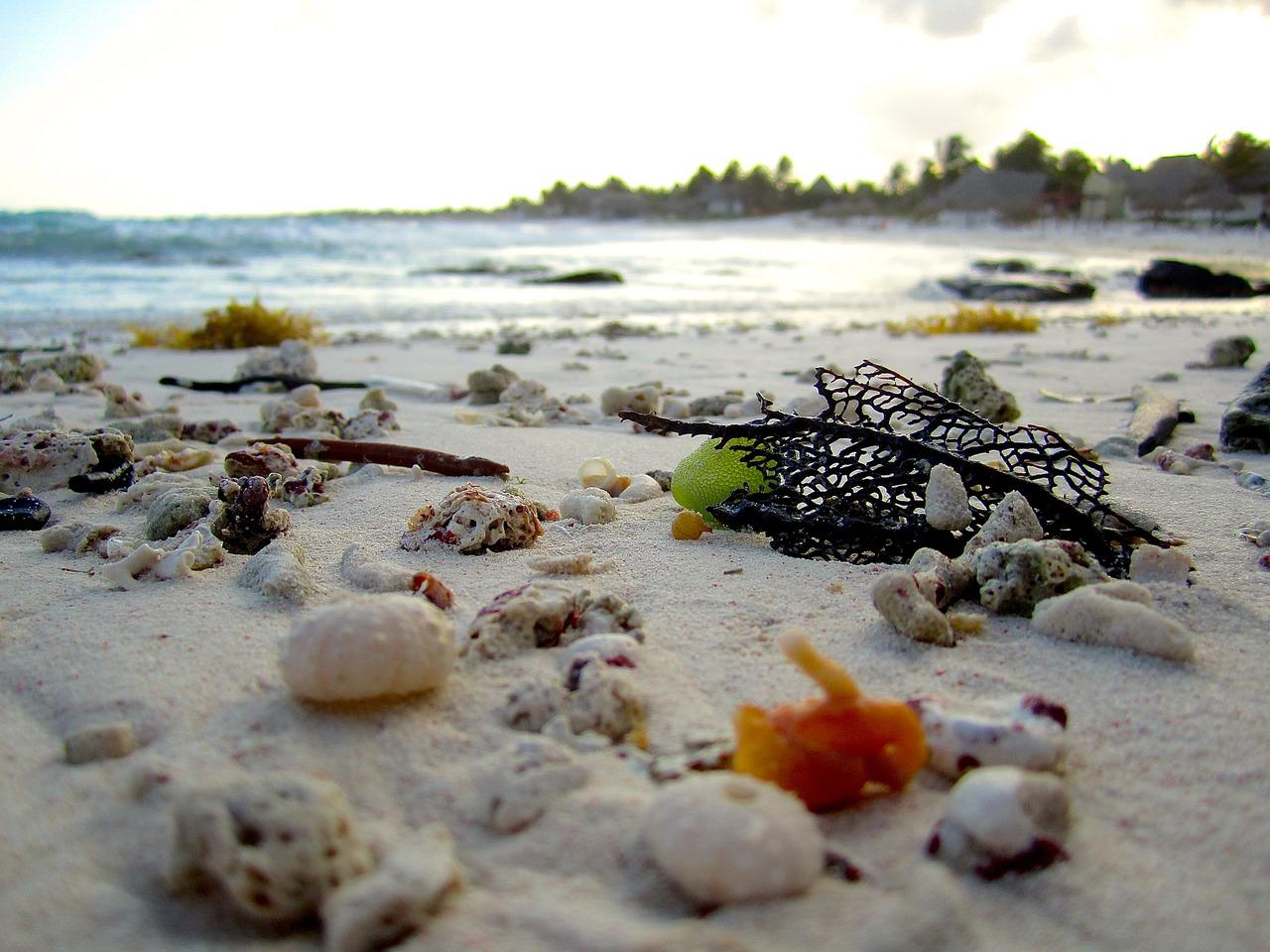 Beach shells shore coral travel