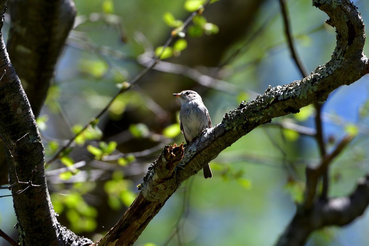 Natural wood outdoors bird