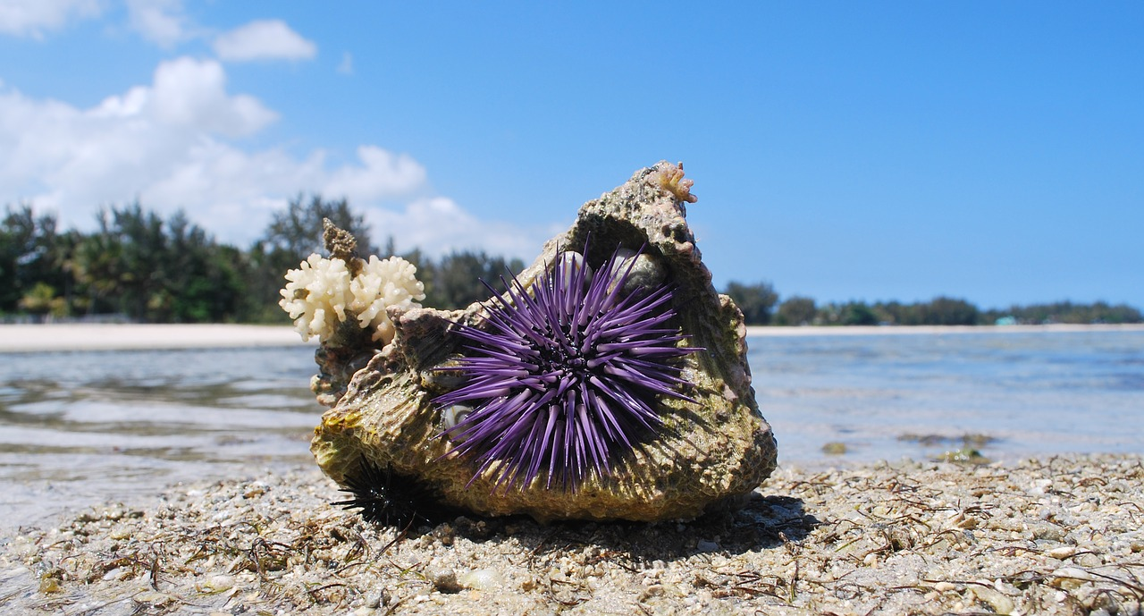 Nature shell urchin stone sea